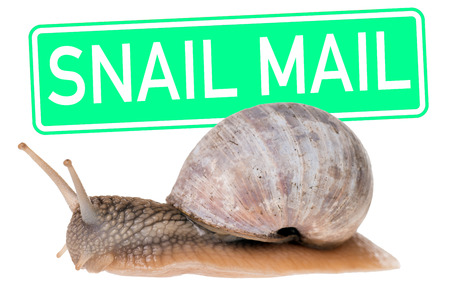 big Snail with a green shield and the words Snail Mail photo
