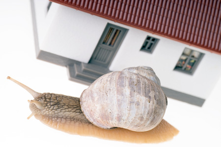 little model: Snail with a little Model House over a white background