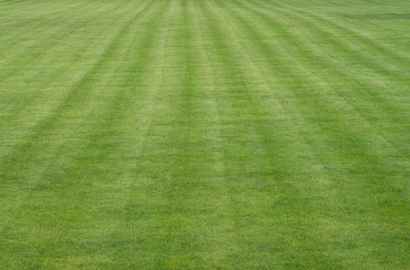 terrain foot: pelouse bien entretenue sur un terrain de football