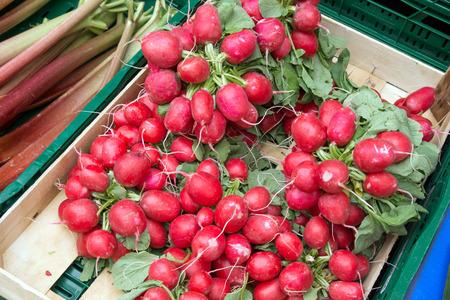 fresh radishes from the market photo