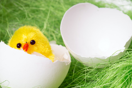 calcareous: broken egg with a small chick