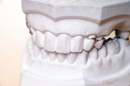 molars: Modelo de los dientes humanos