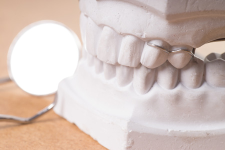 molars: model of a human teeth with mouth mirror