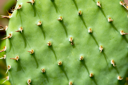 Cactus with spines