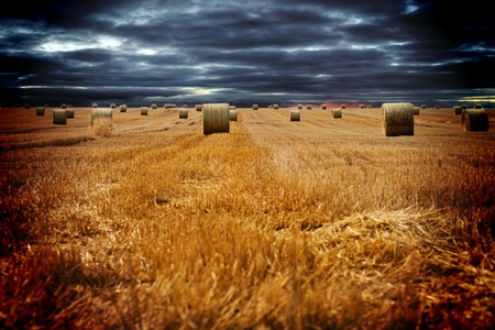 straw bales on a field with beautiful dark sky photo