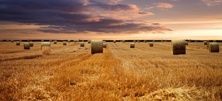 straw bales on a field with beautiful sky photo