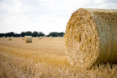 harvests: straw bales on a field Stock Photo
