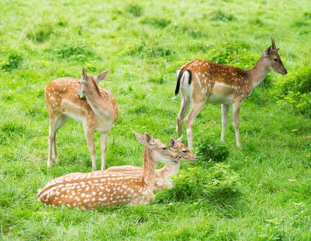 enclosure: Deer in an enclosure