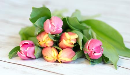 floristics: beautiful tulips on a wooden background