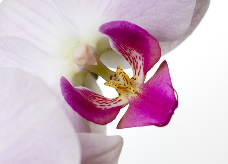 orchid house: Blossoms of an orchid