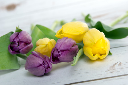 flowerpower: beautiful tulips on a wooden background