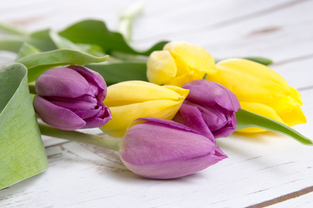 heralds: beautiful tulips on a wooden background