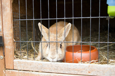 hutch: Rabbit in a rabbit hutch Stock Photo