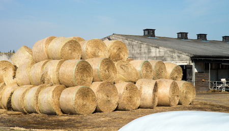 stockpile: many straw bales on a farm