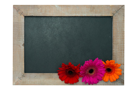 exempted female: Wooden panel with Gerberas isolated over a white background
