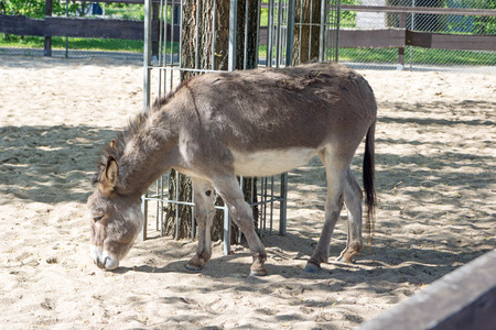 burro: Donkey on a clay court