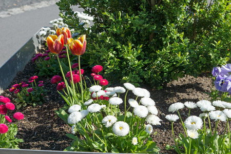 well maintained: beautiful flowers in a flower bed Stock Photo