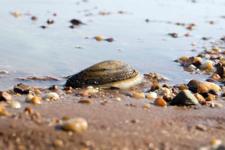 seashell: Water and many Stones with seashell