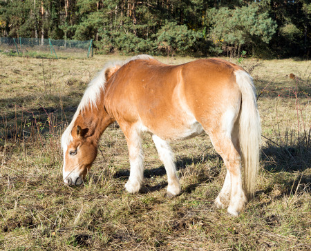 warm blooded: Horse in a paddock