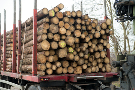 many tree trunks on a truck Stock Photo