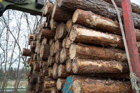 lumbering: many tree trunks on a truck Stock Photo