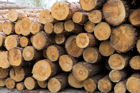 lumbering: many tree trunks on a pile Stock Photo