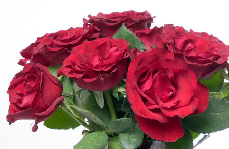 love proof: red roses over a bright background