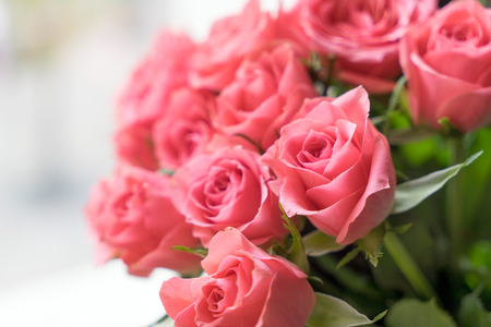 love proof: pink roses over a bright background