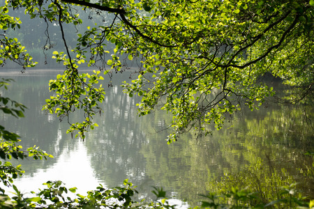 unaffected: small lake with trees in the sunlight Stock Photo