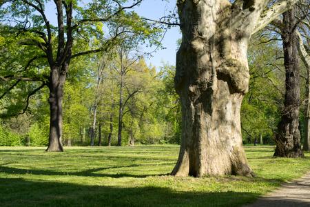 superficie: maravillosa zona verde jard�n