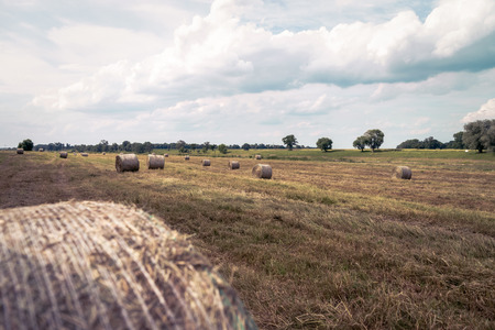 time bound: Straw bales in a field Stock Photo