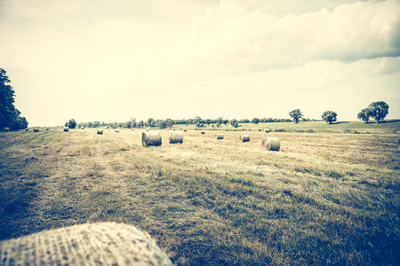 bales: Straw bales in a field Stock Photo