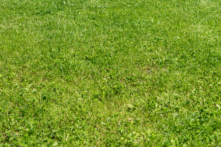 lawn area: manicured green lawn area