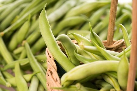 harvested: many freshly harvested green beans