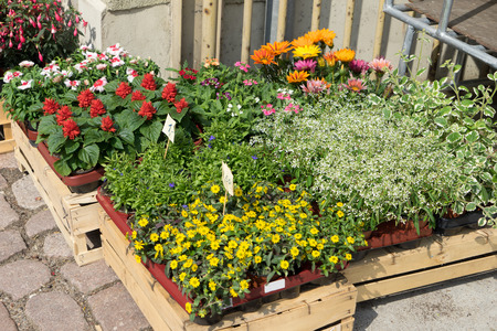 hardiness: many different Flowers in front of a flower shop