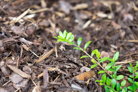 Green plant surrounded by bark mulch Stock Photo