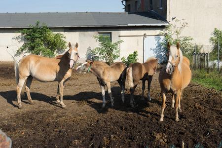 hoofed: Horses in a paddock