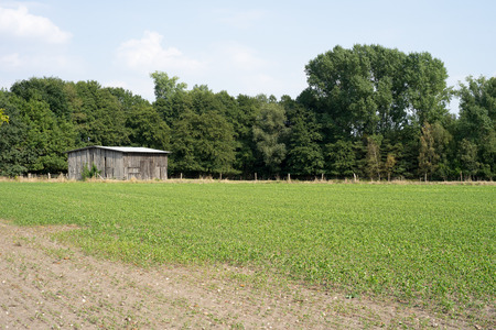 wooden hut: Old wooden hut on a field