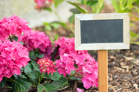 blank sign and a flower in a garden Stock Photo