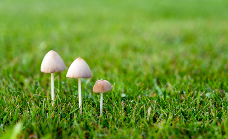three mushrooms in a meadow Stock Photo