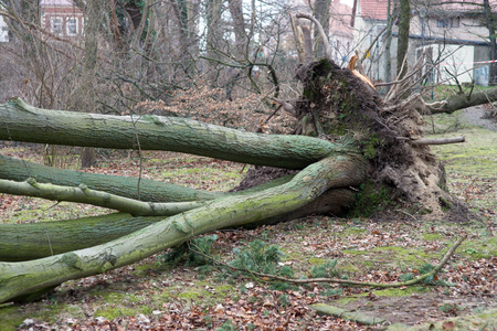 fallen tree after a storm Stock Photo
