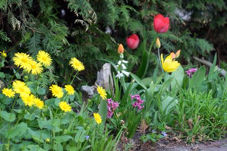 various flowers in a garden Standard-Bild - 100717062