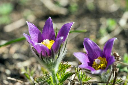 beautiful flowers in a garden Standard-Bild - 100806818