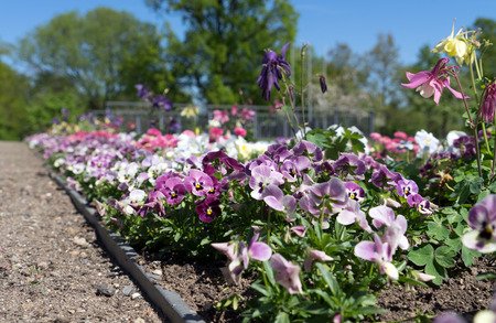 beautiful flowers in a flowerbed Standard-Bild - 101071113