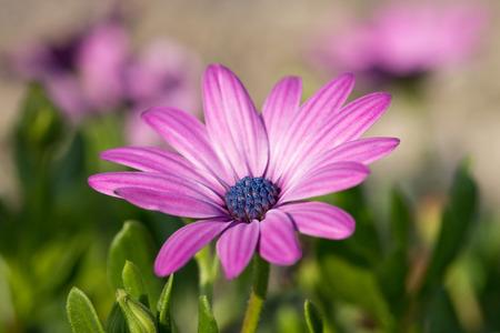 beautiful flower in a garden Standard-Bild
