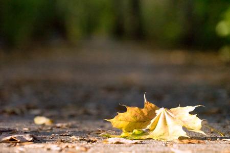 Forest path with foliage in autumn Standard-Bild - 116213092