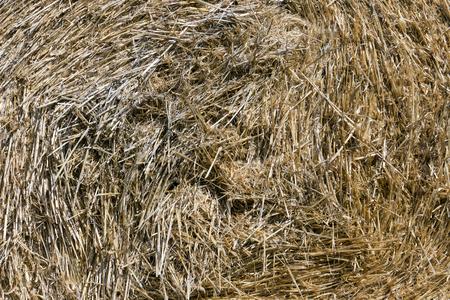 close up of a straw bale Standard-Bild