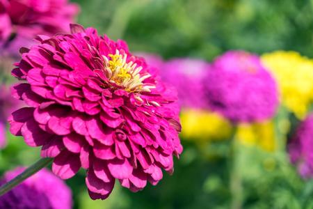 Closeup of a flower in a garden Standard-Bild