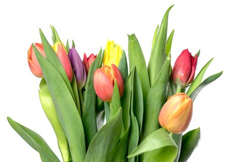 tulips over a bright background