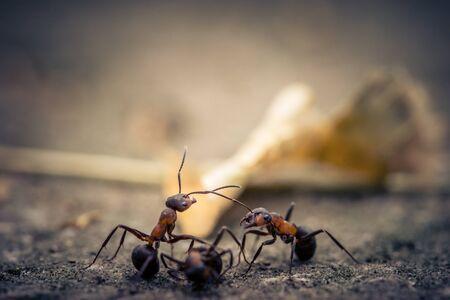 Close up of an ant Standard-Bild